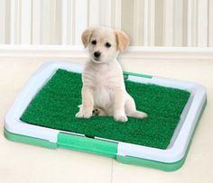 Yeni ürünümüz Pet Park Köpek Tuvalet Eğitim Kiti  stoklarımıza girmiştir- Daha fazla hediyelik eşya,hediyelik,bilgisayar ve pc,tablet ve oto aksesuarları kategorilerine bakmanızı tavsiye ederiz http://www.varbeya.com/urun/pet-park-kopek-tuvalet-egitim-kiti