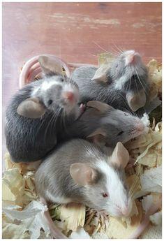 Little mice!