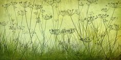 Wildflowers Lining the Trail - Lime - Tapetit / tapetti - Photowall