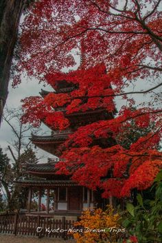 The Five-Storey Pagoda (五重塔-gojūnotō) of Kaijūsen-ji, during the autumn of 2014, in Kizugawa, Kyoto-fu. The pagoda dates back to the early Kamakura period (鎌倉時代; 1185–1333) and is classified as a national treasure of Japan.