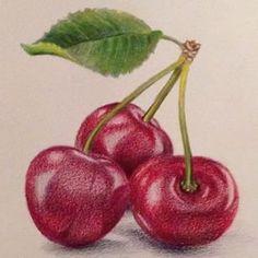 фрукты и ягоды карандашом - Поиск в Google