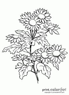 Print Out And Color This Picture Of Some Daisy Flowers For A Quick Easy Kid Friendly Activity The Big Birthday Calendar Book Large Adult Coloring
