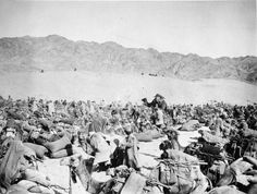 EGYPT PALESTINE 1914 - 1918 (Q 103750)   Guerrilla Operations 1918: Loaded camels kneeling, part of a large convoy bound for Abu Lissal from Tefileh.