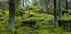 Old Trees, Gaia, Wonders Of The World, Finland, Natural Beauty, Flora, Wildlife, Nature, Plants