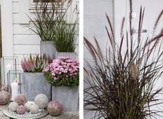 Planting Flowers, Flower Plants, Garden Inspiration, Beautiful Gardens, Outdoor Spaces, Autumn, Landscape, Google, Design