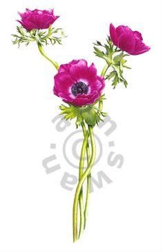 Ann Swan - Pink Anemones