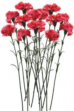 Artificial Single Carnation Stems (Set of 15, Dark Pink)