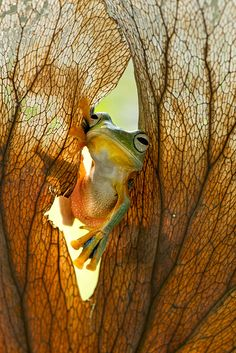 ~~I Want To See You | Frog by Steven Arsenal~~