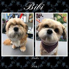 Bibi,pretty shih-tzu girl 🥰 Grooming Salon, Shih Tzu, Diva, Bunny, Teddy Bear, Toys, Pretty, Animals, Activity Toys