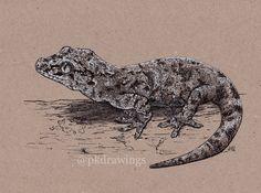 Just little drawing of gargoyle gecko.   by Patrícia Kleinová  @pkdrawings