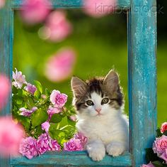 ...kitty...