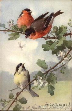1929 Catherine Klein bird art by echkbet