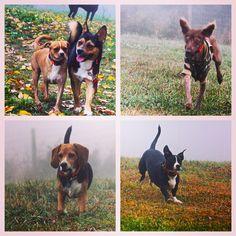 Autumn in the endless mountains is so beautiful! #evasplaypupspa #dogs #dogcamp #doggievacays #dogsinnature #runfree #endlessmountains #mountpleasant #PA #pennsylvania