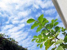 2014年9月17日(水)こんにちは。すっかり空も秋模様。食欲の秋がやってきたところで鼻水やくしゃみ...これって花粉症!?調べてみると「秋花粉にご用心」という記事が出てきました。主にイネ科の植物や、ヨモギ、ブタクサといったキク科の雑草類などが「秋花粉」に挙げられるそうです。というわけで、春に残った薬を飲むと絶好調。花粉症...治る手立ては無いんでしょうかねぇ(^^;  それでは、今日も皆様にとって良い1日になりますように☆ 【加古川・藤井質店】http://www.pawn-fujii.jp/