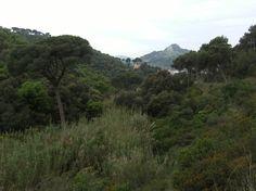 Vall de la Font de Tort