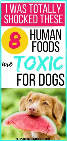 What can dogs not eat? Every dog owner should know the answer! Learn which human foods are toxic foods for dogs in this list of 8 Foods Dogs Can't Eat. Easy Dog Treat Recipes, Dog Food Recipes, Millionaire Lifestyle, Toxic Foods For Dogs, Corgi Breeds, Dog Information, Dog Care Tips, Homemade Dog Food, Dog Love
