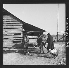 Tenant farmer unhitching team. Walker County, Alabama.  Taken by Arthur Rothstein in February 1937