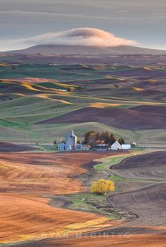 Palouse, Washington. No more beautiful place in the world than the rolling hills of the Palouse.