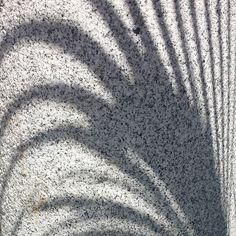 L'ombra d'una palmera