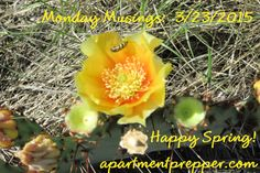 Monday Musings 3222015 Happy Spring
