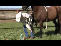 How to trim a bare foot horse - Mustang Hoof Roll - www. Horse Information, Clothes Horse, Horse Clothing, Horse Tips, Horse Care, Show Horses, Little Dogs, Horse Riding, Barefoot