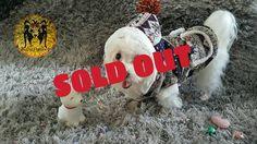 One of best seller  Sold out thank you :) #puppies #anjinglucu #rabbitclothing #bajuanjing #dogshirt #jualan #jualbajuanjing #jualkalunganjing #supermurah #dogtoy #bajuanjingimport #bajuanjingmurah #talianjing #harness #harnessanjing #kalunganjing #pinchcollar #collaranjing #doglover #petshop #petstore #petshopindonesia #petsupplies #pet #petolshop #petstagram #instadog #igdog #bubupetshop by bubupetshop #lacyandpaws
