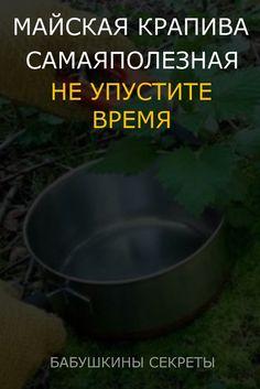 Garden Pots, Natural Health, Health Fitness, Healthy, Nature, Plant, Botany, Garden Planters, Naturaleza