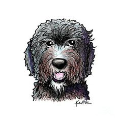 Dog Drawing - Black Dood White Beard by Kim Niles