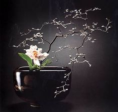 Ikebana - bonsai = beautiful, graceful, elegant and minimal.