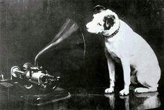 Vintage RCA dog