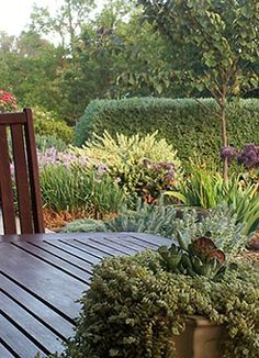 1000 images about tookoo landscape designs on pinterest for Landscaping ideas adelaide