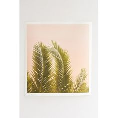 Wilder California Tropical Palm Art Print (£41) ❤ liked on Polyvore featuring home, home decor, wall art, pictures, filler, backgrounds, green, polaroid, tropical picture and tropical palm plants