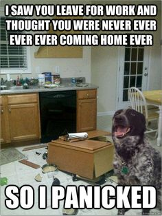 Our dog would do this.