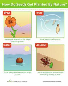 Worksheets: Seed Dispersal