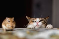 Cats understand the principle of cause and effect as well as some elements of physics. Combining these abilities with their keen sense of hearing, they can predict where possible prey hides.