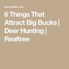 6 Things That Attract Big Bucks | Deer Hunting | Realtree