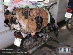 un cane nella Cina di oggi; Cerchiamo di cambiare questa mentalità