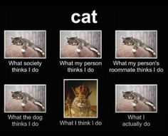 LOLcats is the best place to find and submit funny cat memes and other silly cat materials to share with the world. We find the funny cats that make you LOL so that you don't have to. Funny Animal Pictures, Funny Animals, Cute Animals, Animal Funnies, Animal Jokes, Funny Photos, Crazy Cat Lady, Crazy Cats, Chat Royal