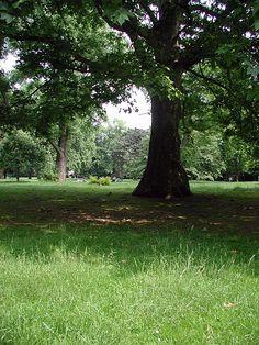Stadtgarten Köln  - Park