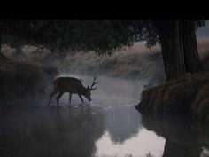 deer, river, and fantasy Bild Narnia, Henry Winter, Lily Evans, Nature Aesthetic, The Secret History, James Potter, Forest Fairy, Faeries, Aesthetic Pictures