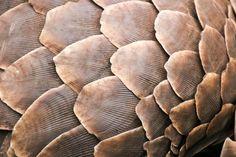 Pangolin – what's a pangolin? - Blog - Travel Africa