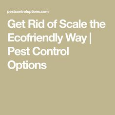 Get Rid of Scale the Ecofriendly Way | Pest Control Options