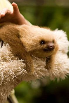 We All Love Sloths