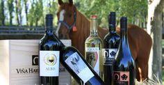 Maipo Valley Premium Tour - Winerist