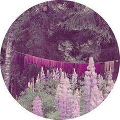 Pantone 2014 Color Radiant Orchid - nature