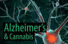 New Study Reveals Cannabis Can Be Used to Prevent and Treat Alzheimer's