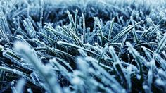 ITAP of frosted grass http://ift.tt/2fNsTNe