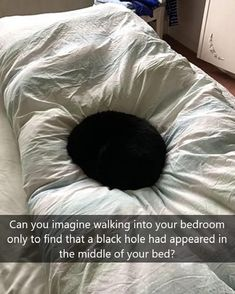 45 Photos Where We See Something That's Not There Funny Animal Memes, Cute Funny Animals, Cat Memes, Funny Cute, Hilarious, Funny Memes, Meme Meme, Animal Funnies, Funniest Memes