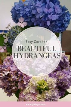 My favorite flower of all time is the Hydrangea. They really are easy care and here are my three favorite tips for beautiful hydrangeas. Hydrangea Care, Blue Hydrangea, Organic Gardening, Gardening Tips, Flower Gardening, Landscaping Around Trees, Landscaping Ideas, Garden Shrubs, Garden Pests