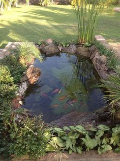 backyard pond ideas & pond in backyard + pond in backyard diy + pond in backyard landscaping + pond in backyard natural swimming pools + backyard pond + koi pond backyard + backyard pond ideas + koi fish pond backyard Fish Pond Gardens, Small Gardens, Outdoor Gardens, Outdoor Ponds, Garden Pond Design, Landscape Design, Diy Pond, Pond Waterfall, Waterfall Design